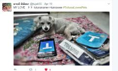 dog_2